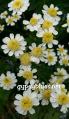 wp-1489868502804.jpg